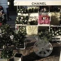 Anyák Napja Chanel módra