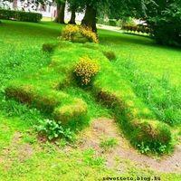Növény art