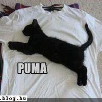 Fekete Puma :)