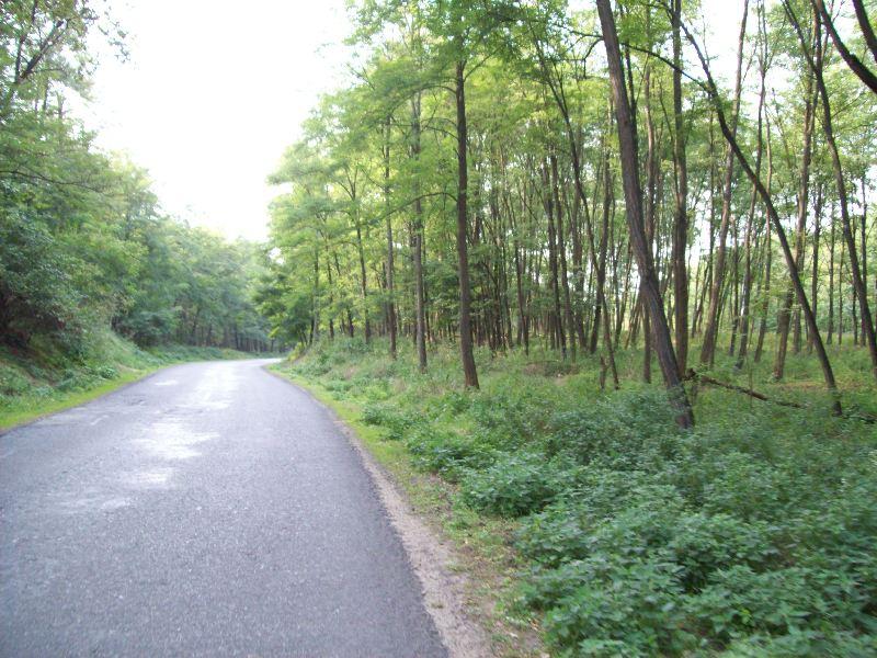 20140907 088 Van erdő.jpg