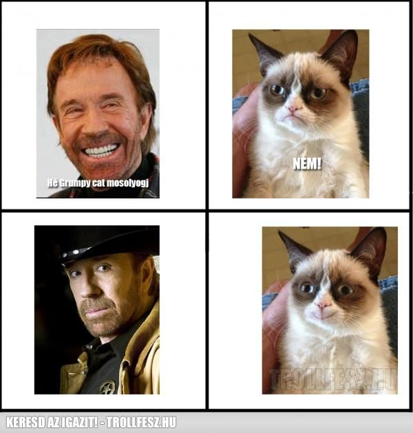 Grumpy cat Vs Chuck Norris.jpg