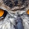 Intelligens formatervezés egy Teremtő nélkül? Miért lehet okosabb az evolúció, mint ahogy azt gondoltuk?