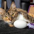 Macskásoknak okos kütyü. Itt az intelligens robotbarát!
