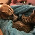 A szorongó kutya és egy macska története.