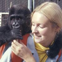 A jelelő gorilla