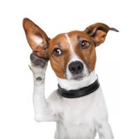 Halló! Itt Buksi! Ott vagy gazdi? Avagy videótelefonálás a kutyáddal.