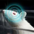 Vajon tényleg létezik egy fajta hatodik érzéke az állatoknak?