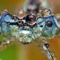 Különleges képek apró rovarokról.