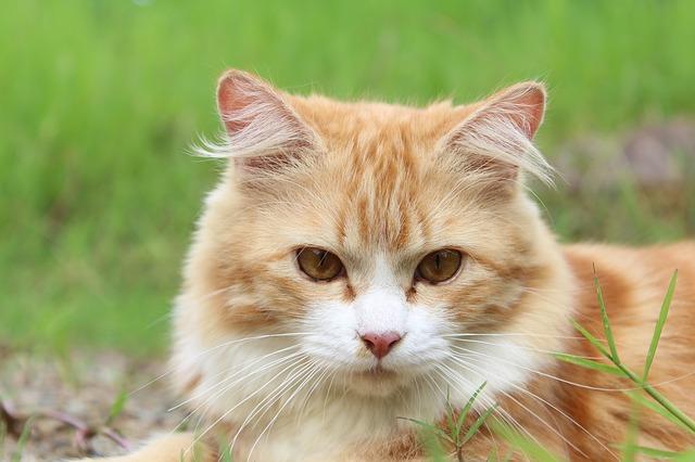 cat-111793_640.jpg