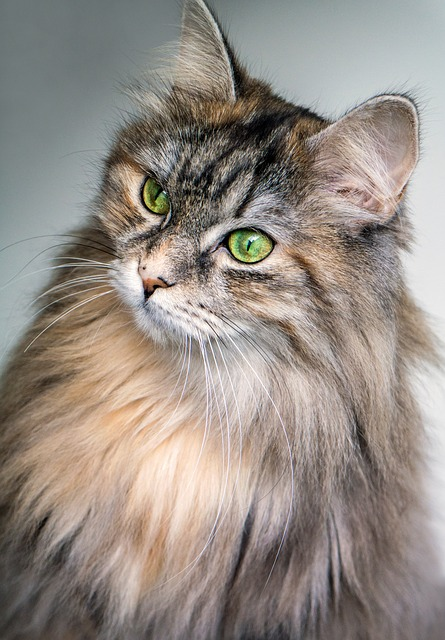 cat-1246659_640.jpg