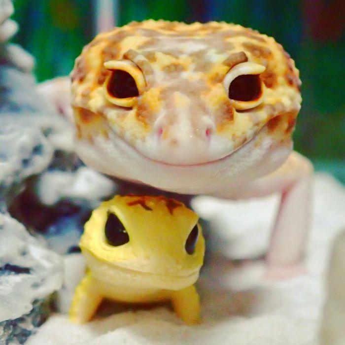 cute-happy-gecko-with-toy-kohaku-5-591e9c3dce145_700.jpg