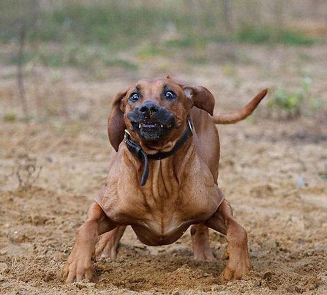 dogs-funny-faces-running.jpg