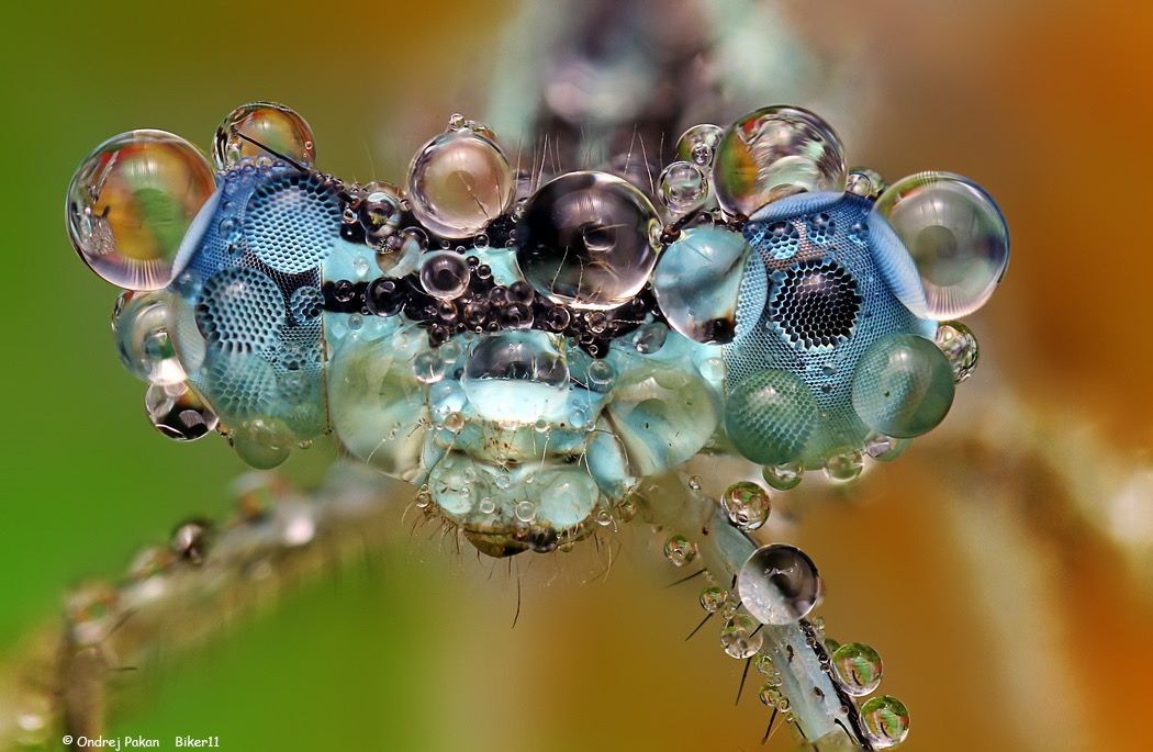 water-covered-insects-by-ondrej-pakan-02.jpg