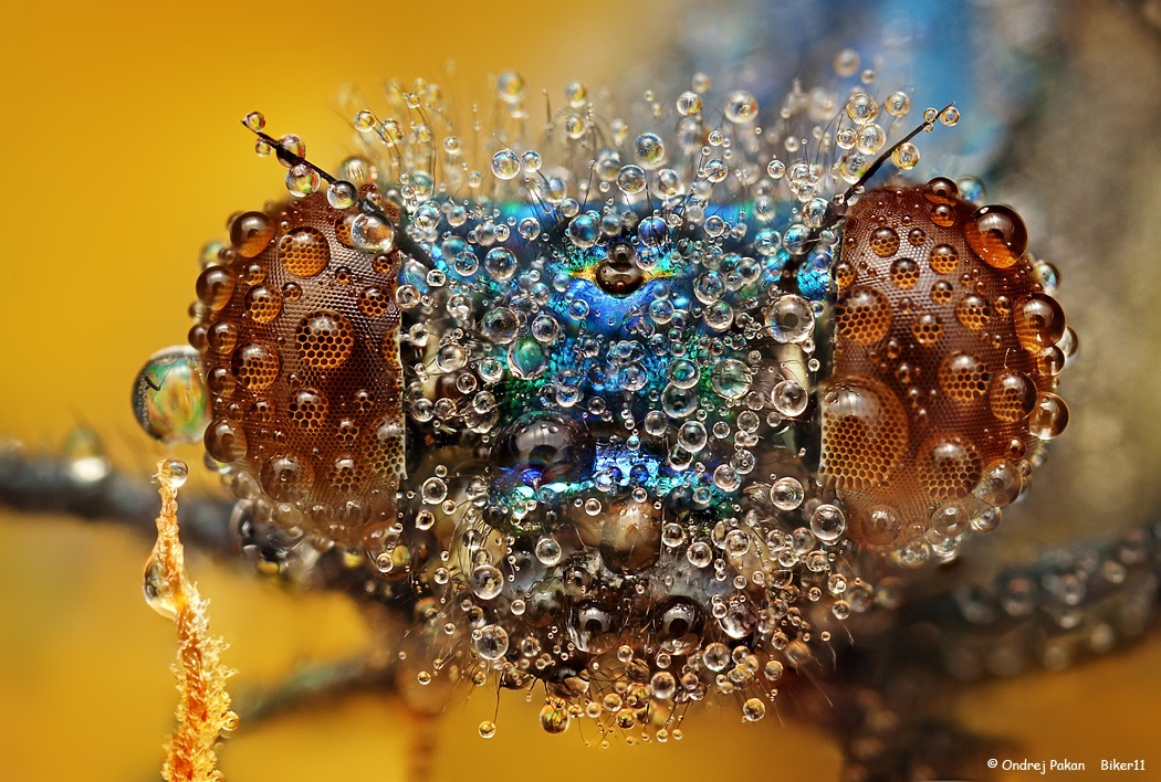 water-covered-insects-by-ondrej-pakan-03.jpg