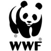 Világhódító Panda maci