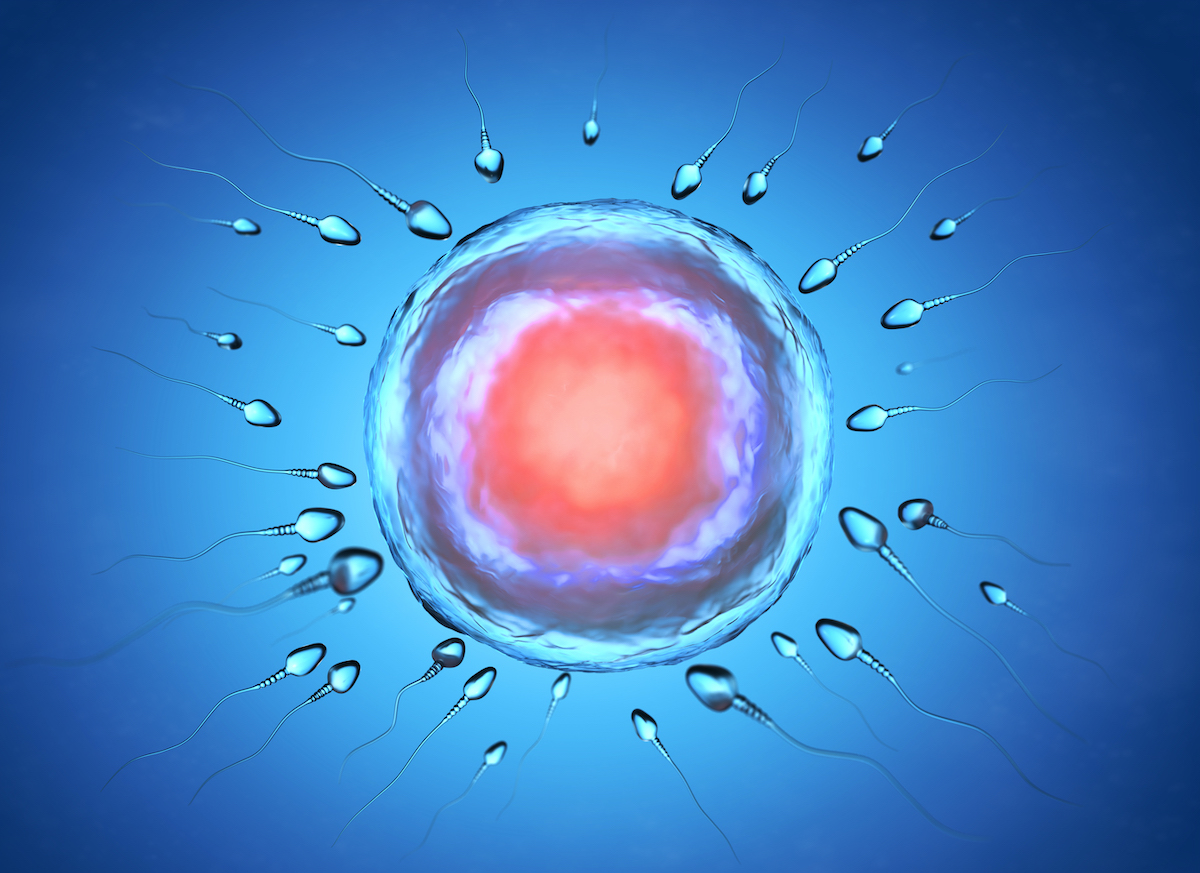 illustration-of-sperm-and-egg-cell-w45axn8.jpg