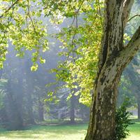 Ismerkedjünk meg szemtől-szembe az allergén növényekkel! 3.
