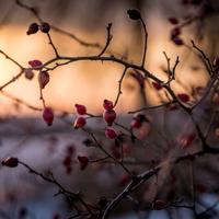 Gyümölcsök az erdőből
