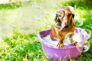 Fürdessük meg Bodrit természetes szerekkel!