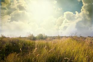 Ismerkedjünk meg szemtől-szembe az allergén növényekkel! 1.