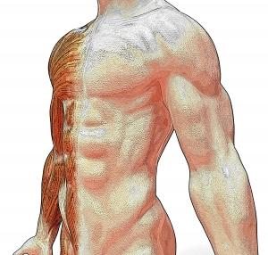 1349598_anatomy.jpg