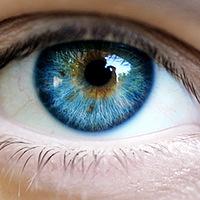 A férfiak és a nők szó szerint más színben látják a világot