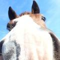 Én és a lovak 1.