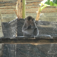 ประเทศไทย 5. – Buddhisták