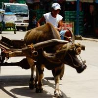 Az élet egy átlagos kisvárosban a Fülöp-szigeteken