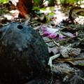A gyilkos kókusztól az üvöltő erdőig, avagy dolgok, amelyek megölhetnek a Fülöp-szigeteken