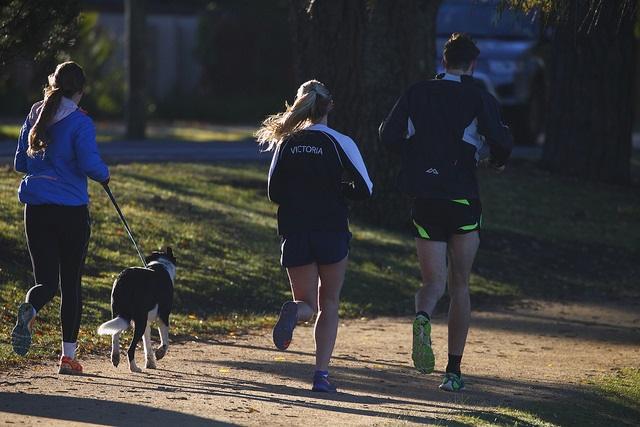 dog_jogger.jpg