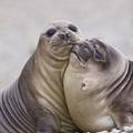 Vidám Valentin-napi inspiráció: bájos állatpárok