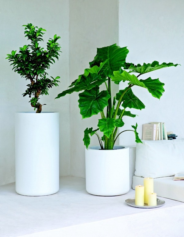feng-shui-plants-for-harmony-and-positive-energy-in-the-living-room-21-180.jpg