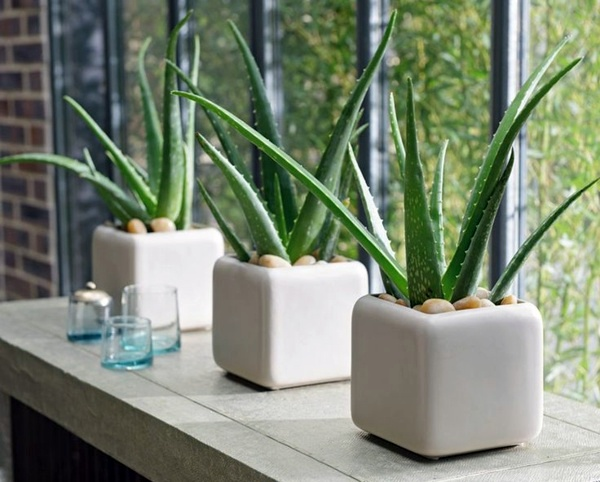 feng-shui-plants-for-harmony-and-positive-energy-in-the-living-room-32-180.jpg