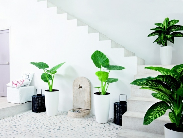 feng-shui-plants-for-harmony-and-positive-energy-in-the-living-room-36-180.jpg
