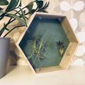 Letisztult, kreatív dekoráció 30 perc alatt különleges növényekkel!