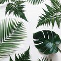 Látványos és egyszerű zöld dekoráció kevesebb, mint 1000 Ft-ból!