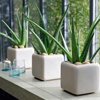 Az otthonod stílusához válassz növényt! 3. rész: Modern, minimalista otthon
