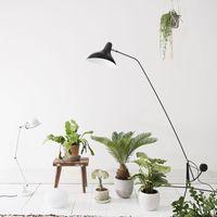 Az otthonod stílusához válassz növényt! 1. rész- Skandináv