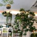Növények a levegőben - avagy a felakasztható virágtartókban rejlő lehetőségek