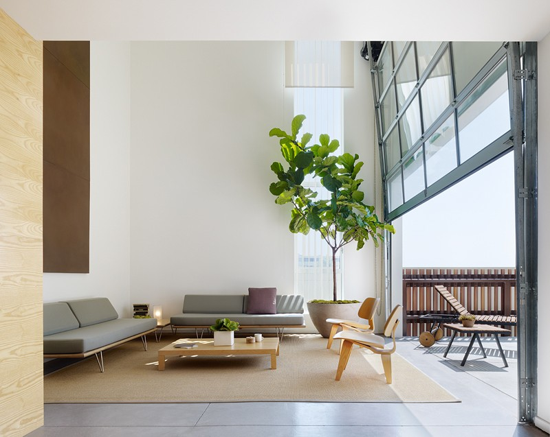 fiddle_leaf_fig_loft.jpg