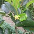 Virága és a kicsi gyümölcsök