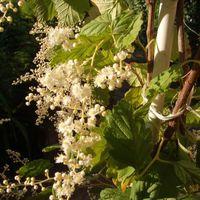 Bimbók és virágok