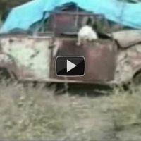 Vicces videó macskákkal :)