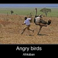 Angry birds afrikában :)