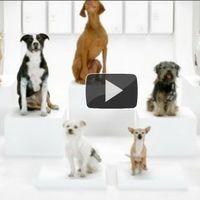 Kutyák elugatják a Star Wars zenéjét... hatalmas :)