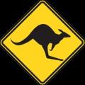 Ausztrál férfi összeverekedett egy kenguruval