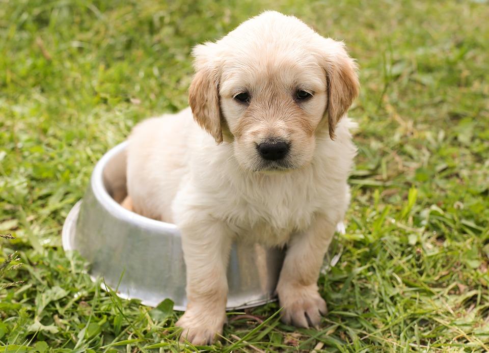 puppy-1207816_960_720.jpg