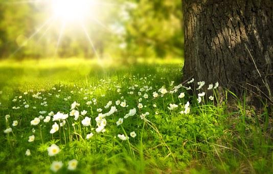 spring-276014_340.jpg