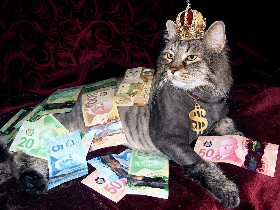 money-1144553_960_720.jpg